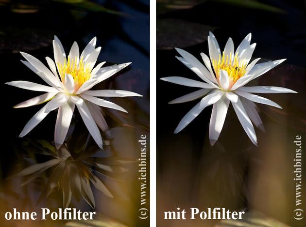 polfilter_spiegelung